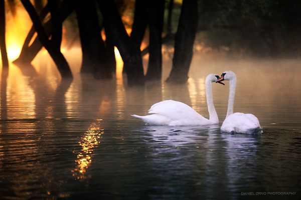 بالصور اجمل الصور الحب والرومانسية 495 3