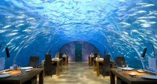 صورة مطعم زجاجي تحت اعماق البحر , مطاعم جمعت الخيال والغرابة