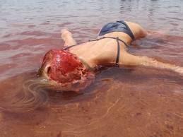 بالصور هجوم سمك البيرانا على شاطي في امريكا الجنوبية 552 3