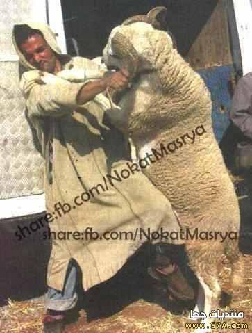 صوره اجمل الصور المضحكة العراقية