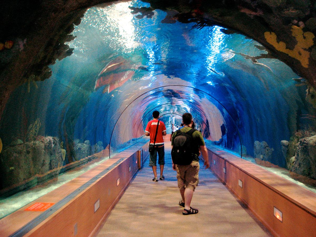 بالصور اكبر حوض اسماك في العالم , احلى انواع الاسماك 677 3