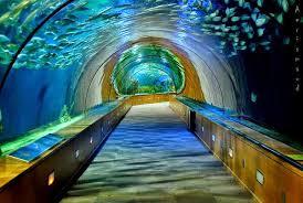 بالصور اكبر حوض اسماك في العالم , احلى انواع الاسماك 677 4