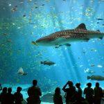اكبر حوض اسماك في العالم , احلى انواع الاسماك