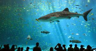 صوره اكبر حوض اسماك في العالم , احلى انواع الاسماك