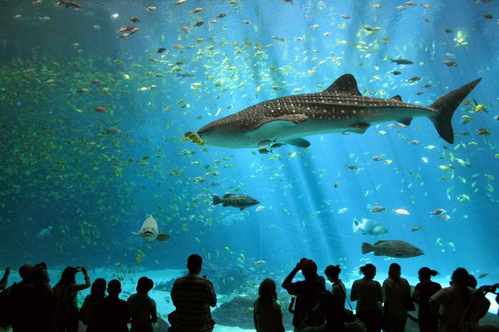 بالصور اكبر حوض اسماك في العالم , احلى انواع الاسماك 677