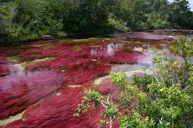 بالصور نهر الكريستال في كولومبيا , احلى الانهار فى العالم 683 5