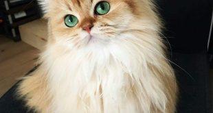 صور القطه smoothie , القطه محبه التصوير