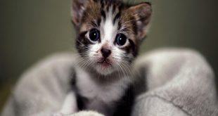 صور احلي قطط ممكن تشوفها , قطط زي الاطفال
