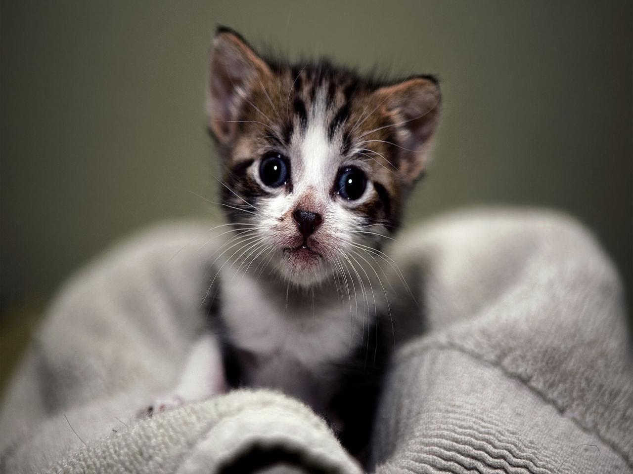 صورة احلي قطط ممكن تشوفها , قطط زي الاطفال
