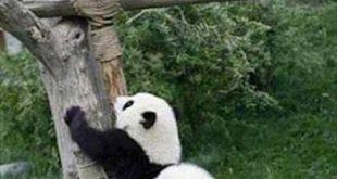 التعاون بين الحيوانات , صور حيوانات روعه