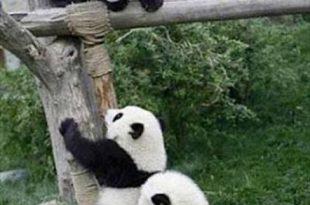 صور التعاون بين الحيوانات , صور حيوانات روعه
