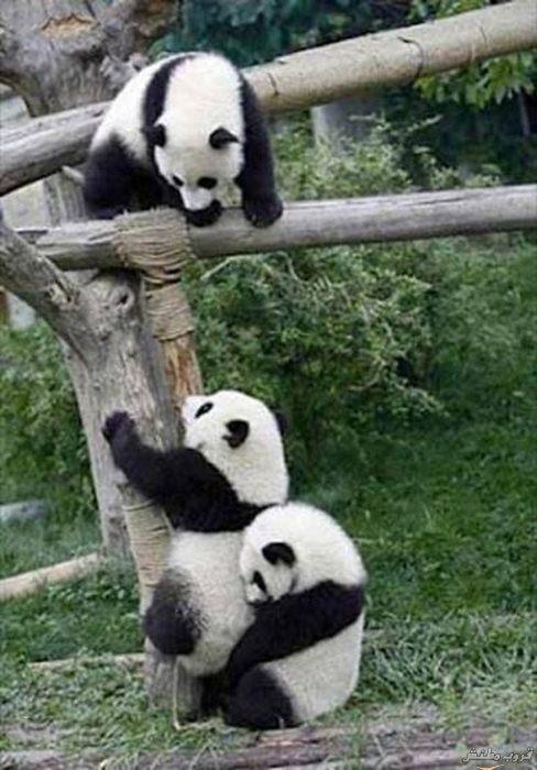 صوره التعاون بين الحيوانات , صور حيوانات روعه