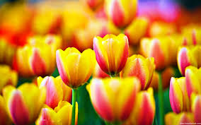 صورة اغرب الازهار في العالم , رائحة الازهار المتميزة