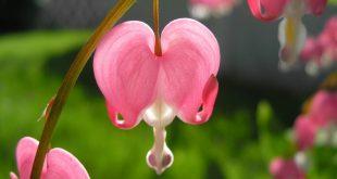 اغرب الازهار في العالم , رائحة الازهار المتميزة