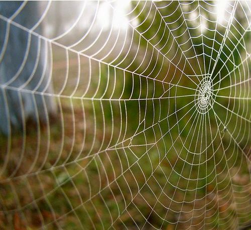 بالصور صور بيوت العنكبوت , اجمل صور لبيوت العنكبوت 981 1