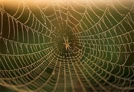 بالصور صور بيوت العنكبوت , اجمل صور لبيوت العنكبوت 981 2