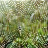 بالصور صور بيوت العنكبوت , اجمل صور لبيوت العنكبوت 981 3