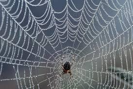 بالصور صور بيوت العنكبوت , اجمل صور لبيوت العنكبوت 981 4