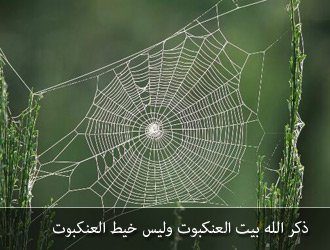 بالصور صور بيوت العنكبوت , اجمل صور لبيوت العنكبوت 981 5