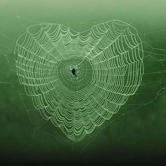 بالصور صور بيوت العنكبوت , اجمل صور لبيوت العنكبوت 981 7