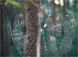 بالصور صور بيوت العنكبوت , اجمل صور لبيوت العنكبوت 981 8