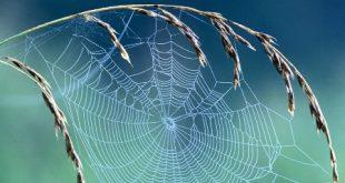 صور بيوت العنكبوت , اجمل صور لبيوت العنكبوت