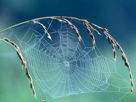 بالصور صور بيوت العنكبوت , اجمل صور لبيوت العنكبوت 981