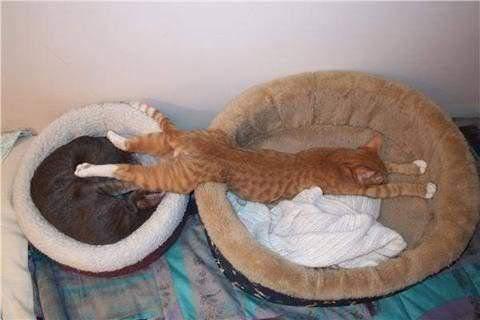 صوره كيف تنام القطط      ,    اجمل اللقطات للقطط النائمه