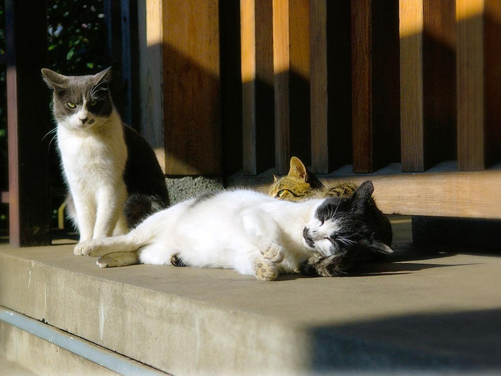 بالصور كيف تنام القطط      ,    اجمل اللقطات للقطط النائمه 1494 2