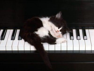 بالصور كيف تنام القطط      ,    اجمل اللقطات للقطط النائمه 1494 7