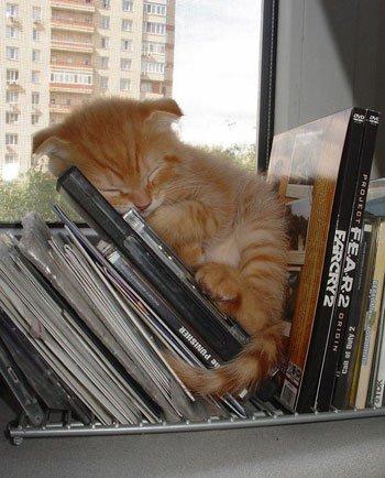 بالصور كيف تنام القطط      ,    اجمل اللقطات للقطط النائمه 1494 8