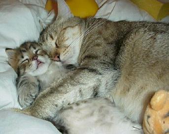 بالصور كيف تنام القطط      ,    اجمل اللقطات للقطط النائمه 1494 9