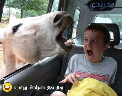 بالصور صور عرض مضحكه    ,    اضحك من قلبك 1500 9