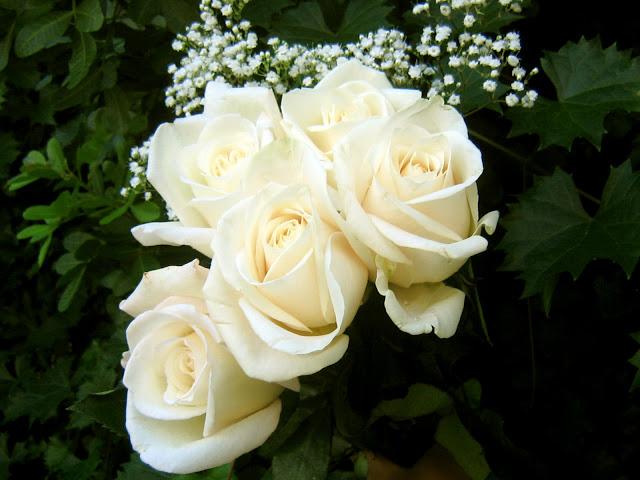 بالصور صور ورود جميله        ,     صور اجمل واروع الورودوالزهور 1556 10