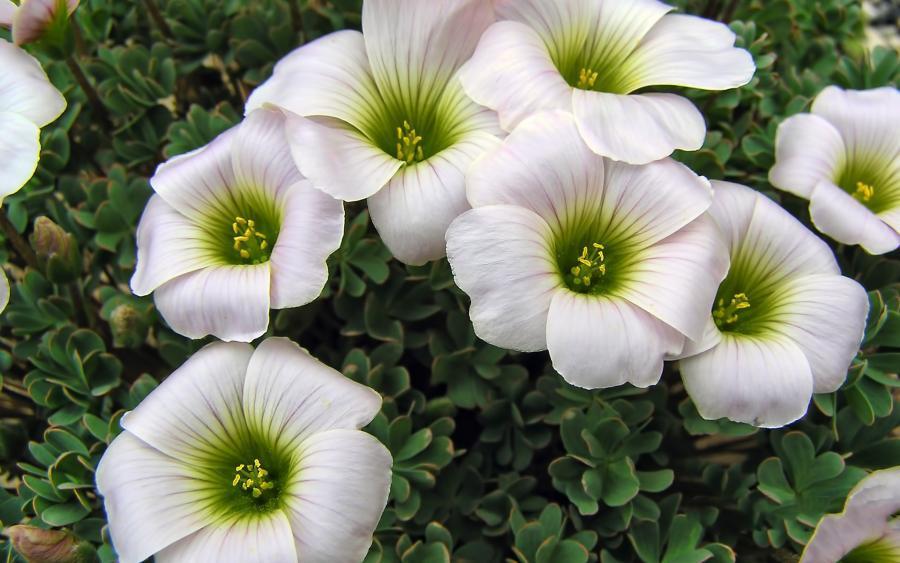 بالصور صور ورود جميله        ,     صور اجمل واروع الورودوالزهور 1556 11