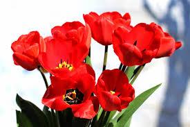 بالصور صور ورود جميله        ,     صور اجمل واروع الورودوالزهور 1556 12