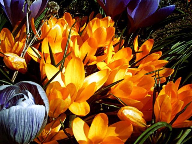 بالصور صور ورود جميله        ,     صور اجمل واروع الورودوالزهور 1556 13