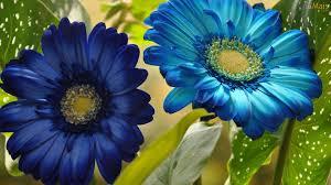 بالصور صور ورود جميله        ,     صور اجمل واروع الورودوالزهور 1556 14