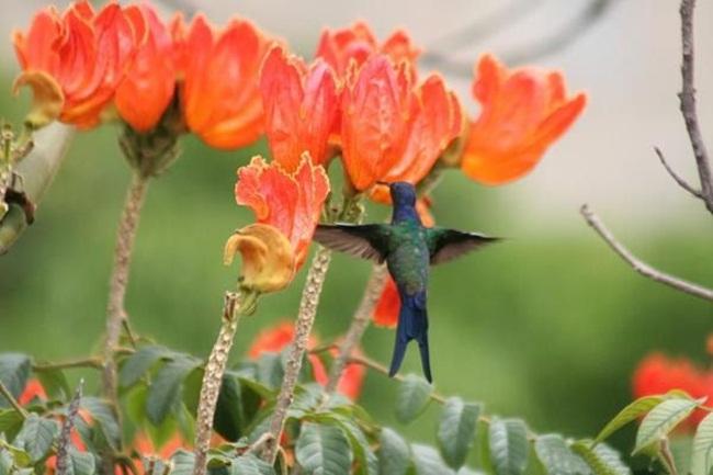 بالصور صور ورود جميله        ,     صور اجمل واروع الورودوالزهور 1556 4