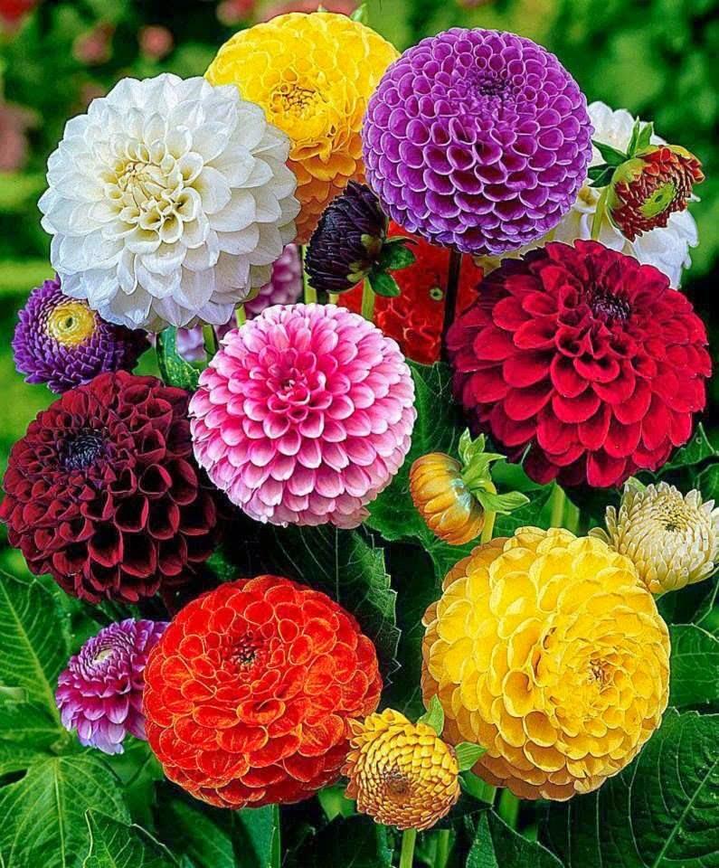بالصور صور ورود جميله        ,     صور اجمل واروع الورودوالزهور 1556 5