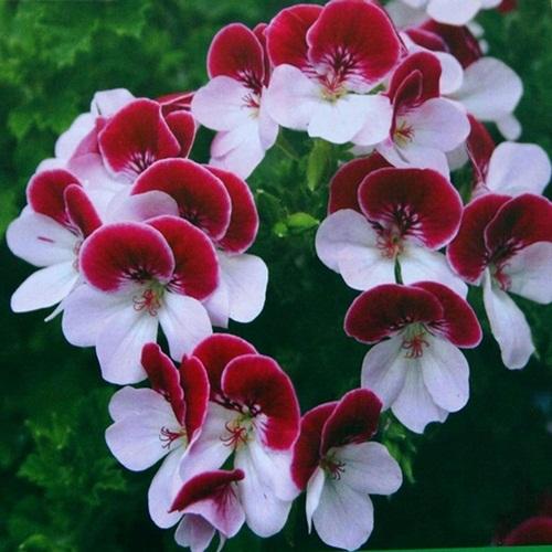 بالصور صور ورود جميله        ,     صور اجمل واروع الورودوالزهور 1556 6