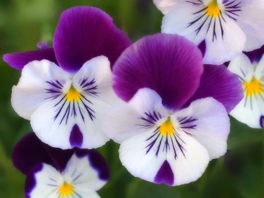 بالصور صور ورود جميله        ,     صور اجمل واروع الورودوالزهور 1556 8