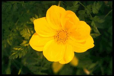 صوره من كل بستان زهرة , كل لون له معنى