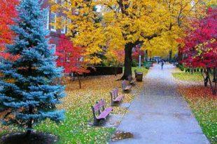 صوره سويسرا في الخريف , وسحر الطبيعة