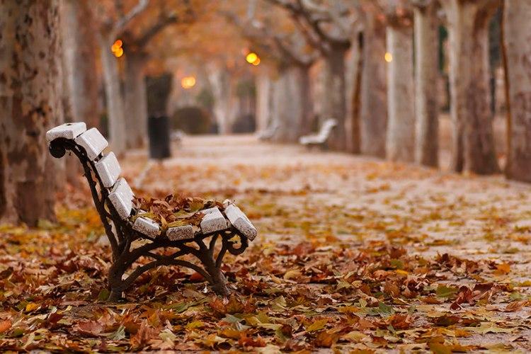 بالصور سويسرا في الخريف , وسحر الطبيعة 2030 6