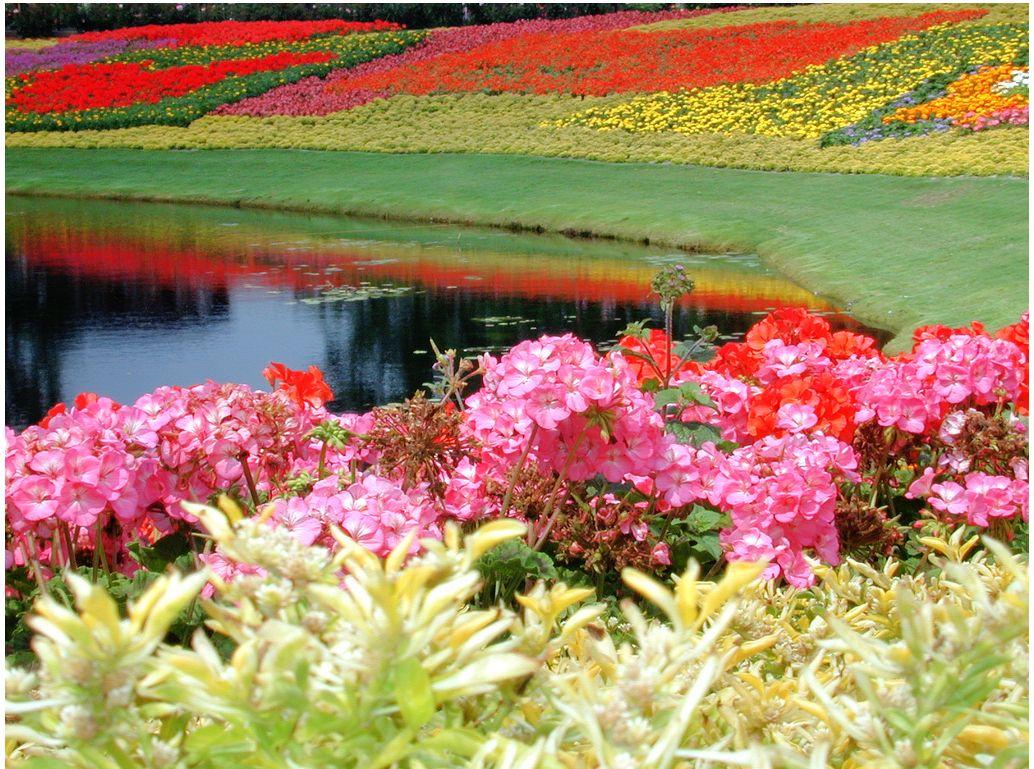 بالصور صور حدائق جميله , روعة التصميم والتنسيق 3257 10