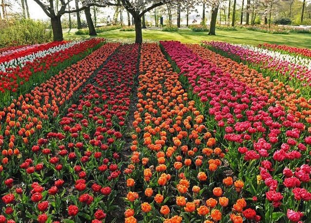 صورة اكبر حديقة في العالم , كيوكينهوف الحديقة الساحرة