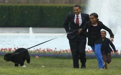 بالصور كلب حراسة اوباما , شراسة وضخامة وقوة 3264 4