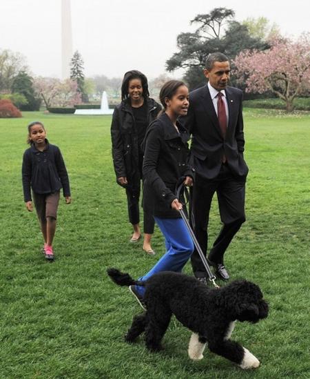 بالصور كلب حراسة اوباما , شراسة وضخامة وقوة 3264 5