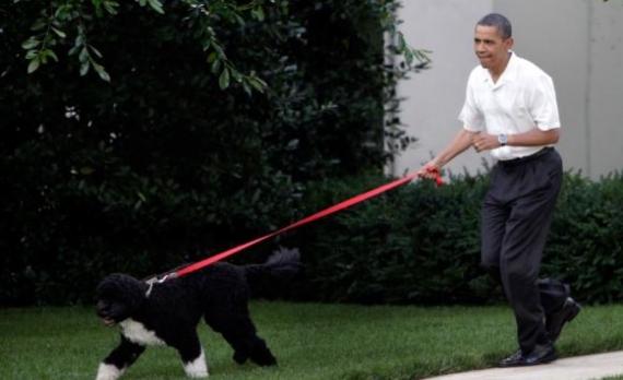 بالصور كلب حراسة اوباما , شراسة وضخامة وقوة 3264 9